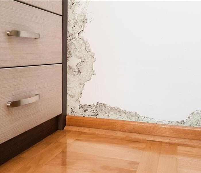 Mold Remediation Mold Growth and Mold Damage in Your Irwindale Home
