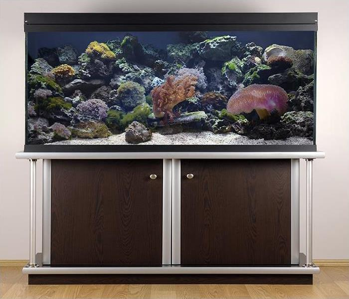 Water Damage How To Handle A Leaky Fish Tank in Your Irwindale Home