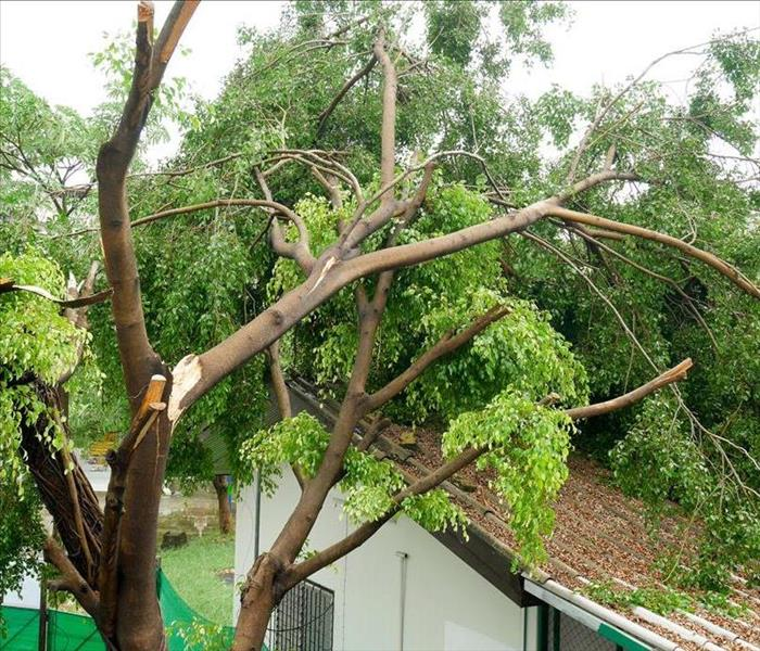 Storm Damage SERVPRO Will Restore Your Covina Home And Put You At Ease After A Flood