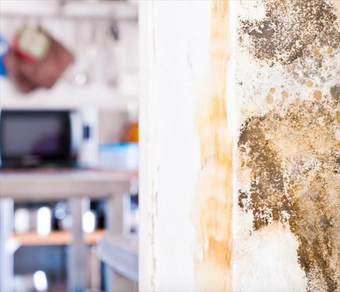 Mold Remediation What to Expect During Professional Mold Damage Restoration at Your Irwindale Property?